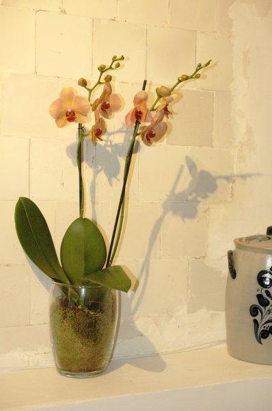 969 detail flower orchide