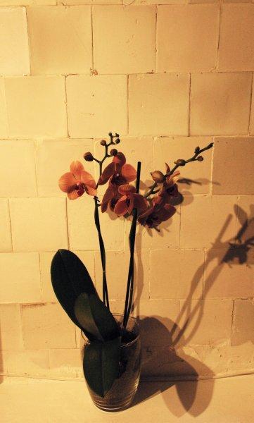 969 detail orchidee tiels